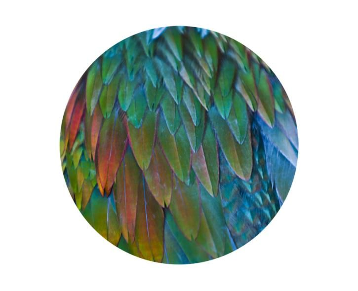 Different bird feathers - photo#12