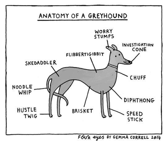 Greyhound anatomy chart