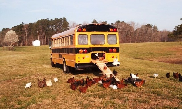 Cool Coops! -- Community Chickens  School Bus Coop - The Cluck Bus!