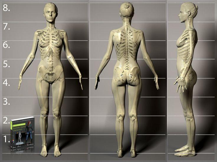 女性骨架與骨骼