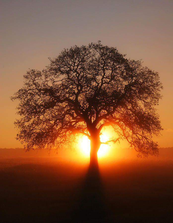 sun fog sunrise trees - photo #6