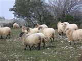 11 - El pastoreo y la ganadería son actividades que preceden a la agricultura que es su complemento ideal y natural.