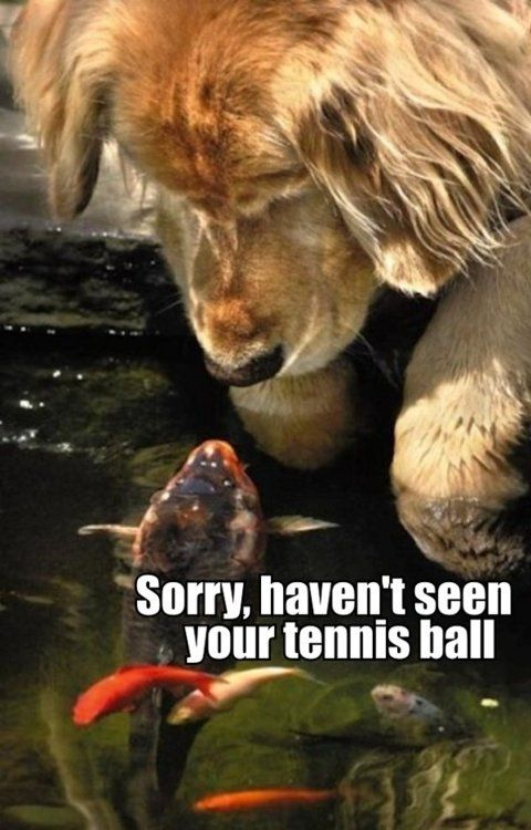 I haven't seen your tennis ball.