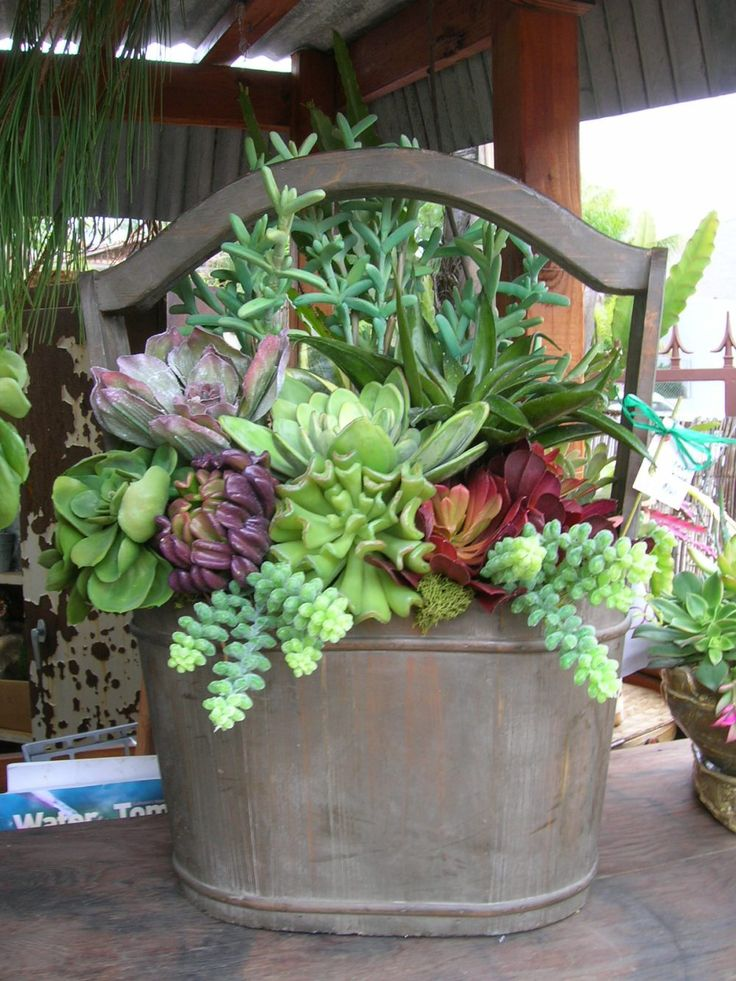Succulent arrangement gardening pinterest for Garden arrangement