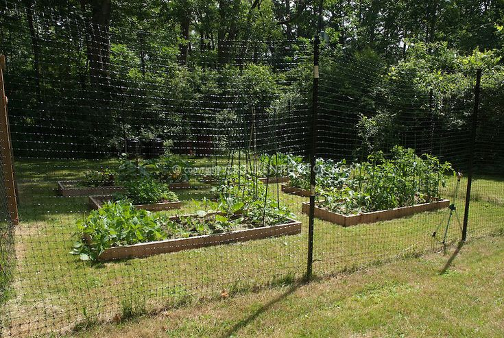 ... Raised Garden Bed With Fence To Keep Deer Out ...