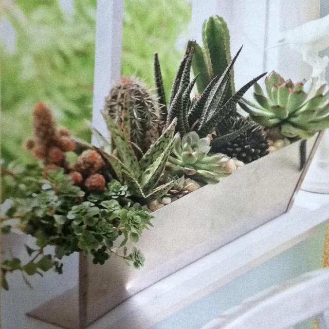 Window Sill Planter Indoor 28 Images Kitchen Herb