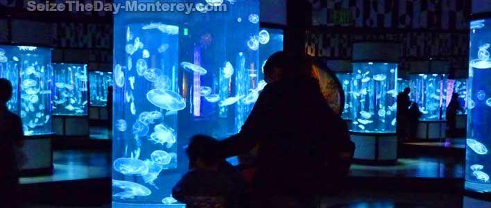 photograph regarding Monterey Bay Aquarium Printable Coupon referred to as Monterey bay aquarium printable coupon codes 2018 : Particular person