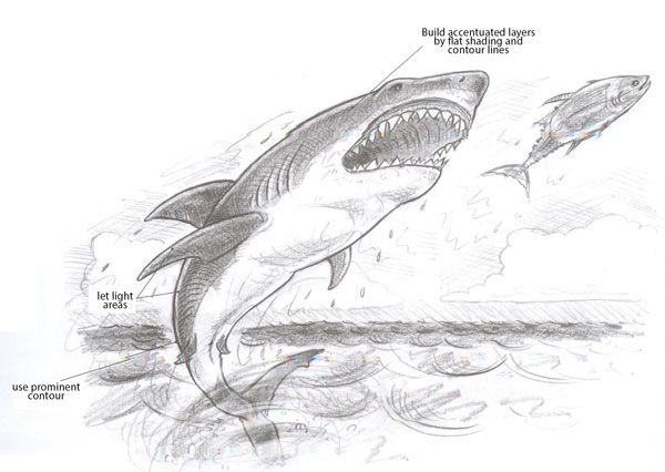 how to draw a white shark
