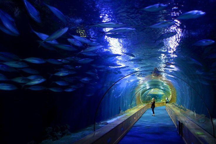 Aquarium Valencia Aquariums Pinterest
