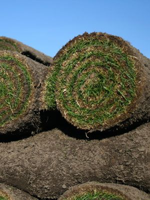 Grass Sod vs. Seeding New Lawn - Organic Grass Sod and Seed Tips - The ...