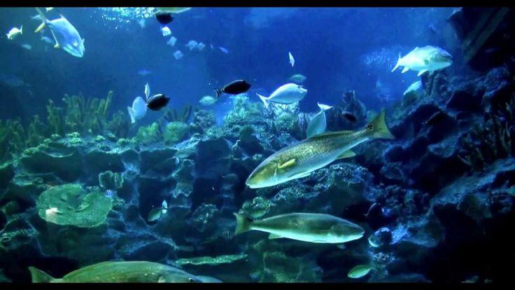 fish aquarium relaxing music - Aquarium 2hr relax music ...