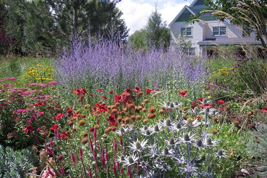Texas Drought Tolerant Flowers Garden Yard Ideas