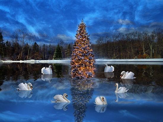 Seven Swans a Swimming | For D.B. | Pinterest