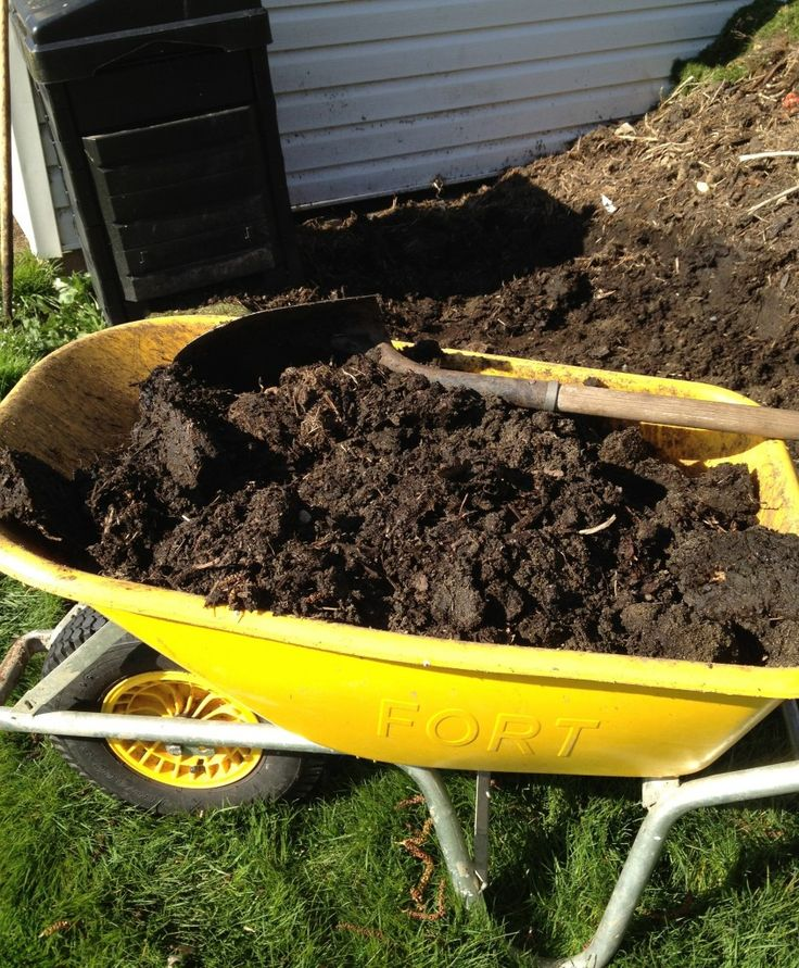 Composting 101 What Is Compost: Composting Basics
