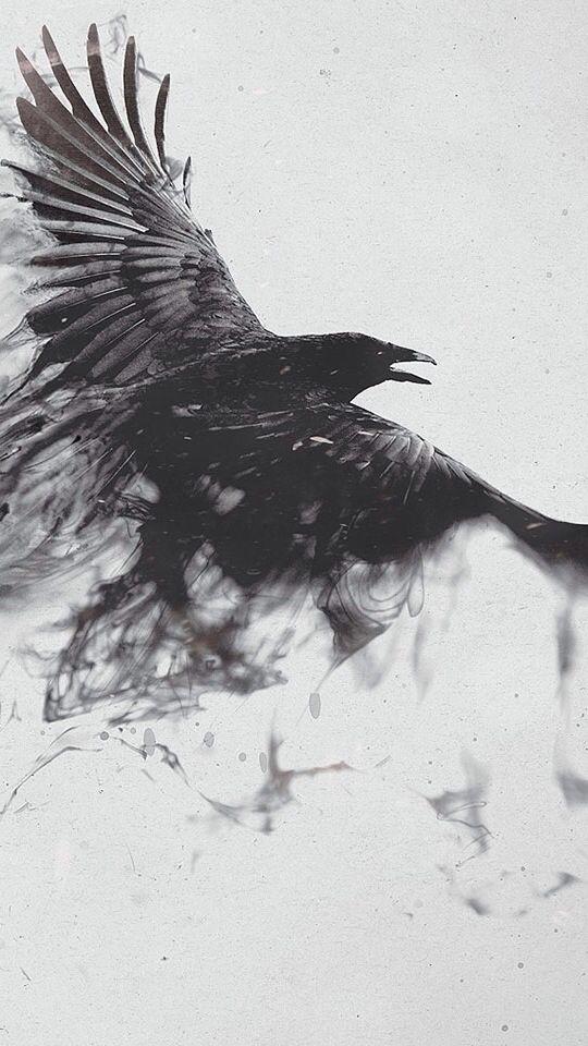 Crow bird wallpaper