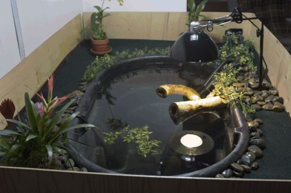 100 gallon indoor pond turtle fish tanks pinterest for Aquarium fish for pond