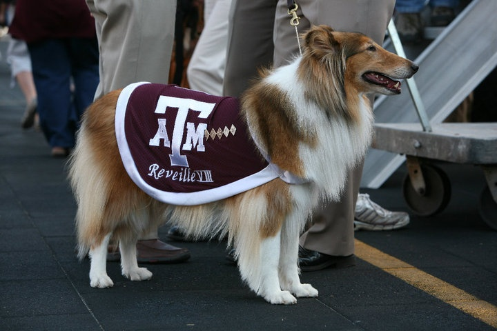 Reveille - mascot, Texas A&M University