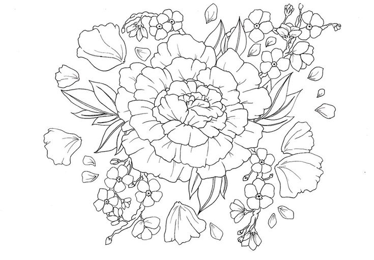 Carnation flower outline
