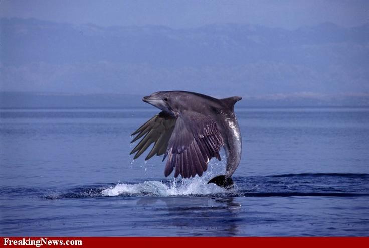Y Flying Dolphins Flying Dolphin?   Crea...