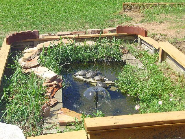 Great idea for enclosing the turtle pond garden pinterest Diy indoor turtle pond