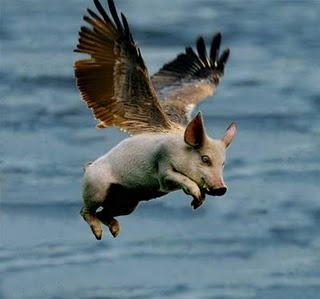 See, pigs do fly!!