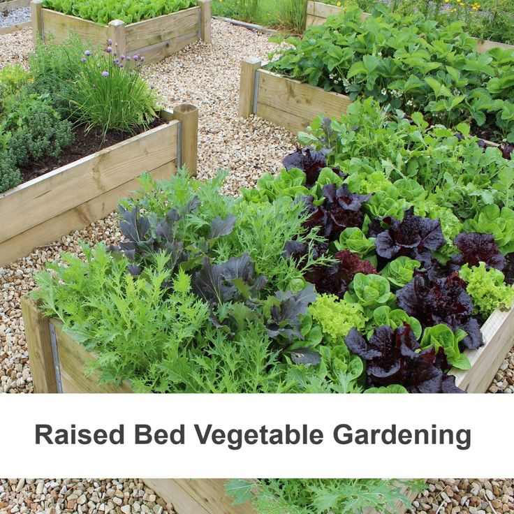 growing vegetables in raised beds box gardening pinterest