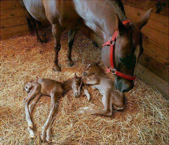 Twin Baby Horses Just Born