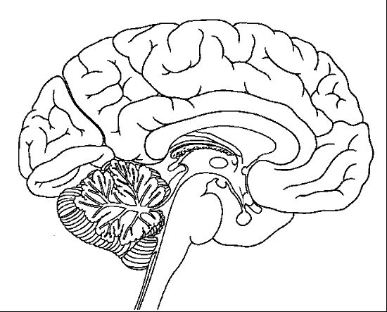 brain coloring page