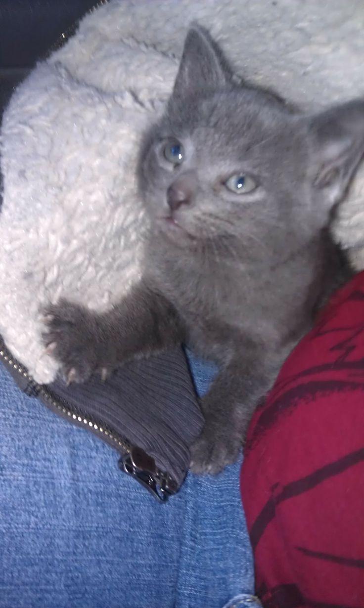 kitten play girl