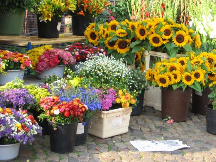 Flower market Freiburg Germany