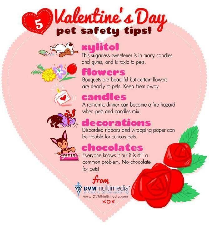 valentine's day animal facts