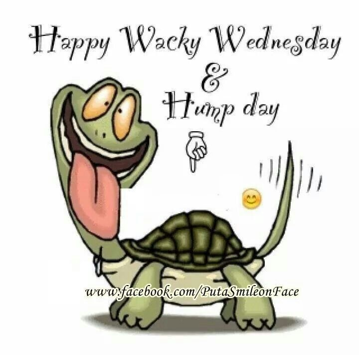 Pinned by Carole MustoHappy Hump Day Funny Quotes