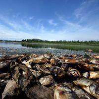 500 tonnes de poissons morts dans des eaux polluées au Mexique