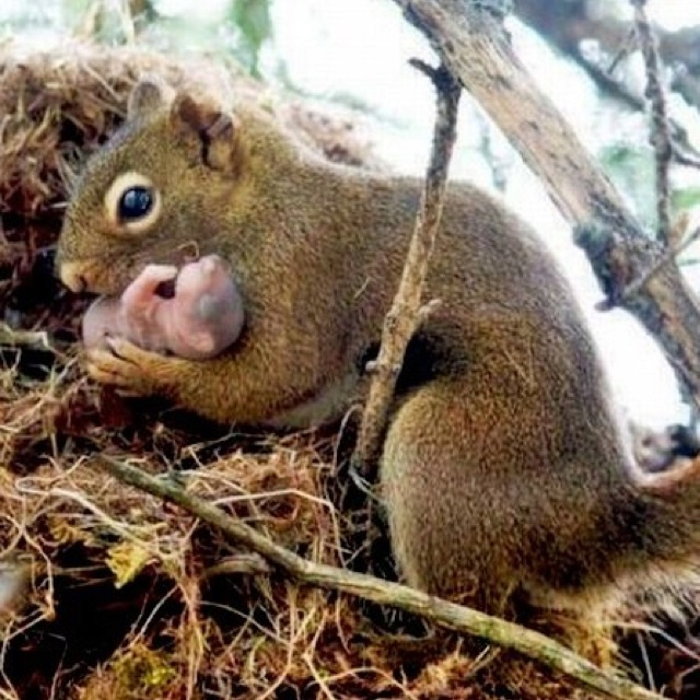 Mama ground squirrel with her baby | animals | Pinterest: pinterest.com/pin/58265388899979099