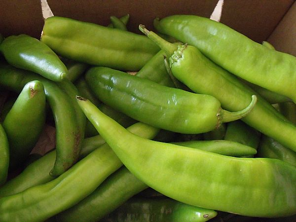 Hatch Chiles | Recipes | Pinterest