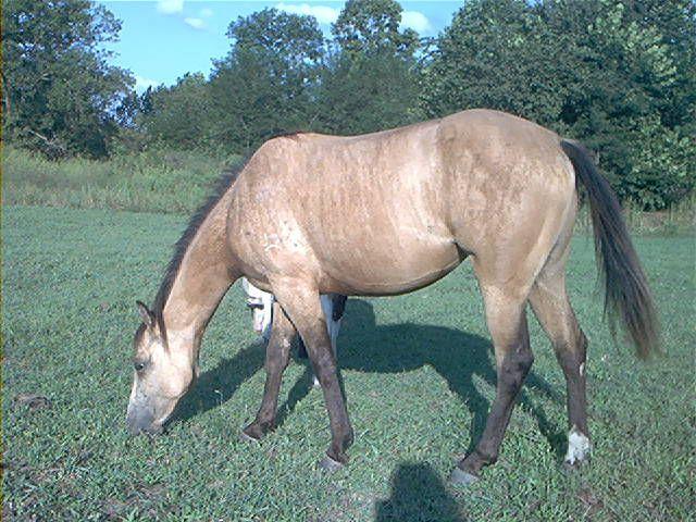 Rare Horse Coats Rare Horse Coat...