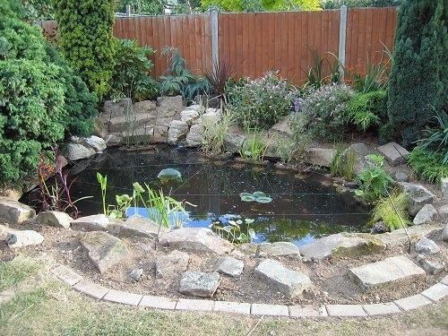 Coy pond home pinterest for Coy ponds pictures