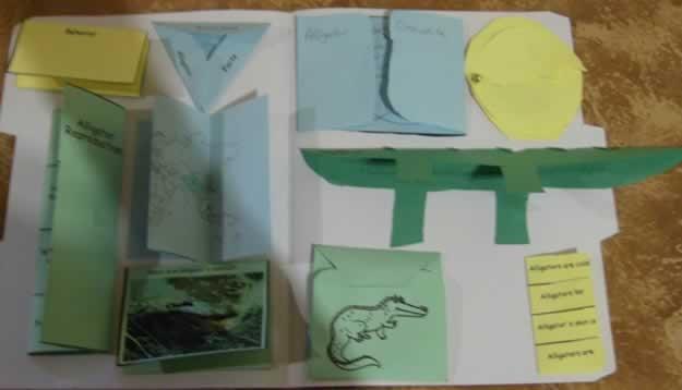 Alligator Lapbook