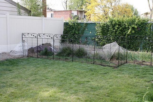 Image Result For Pet Pool Fence