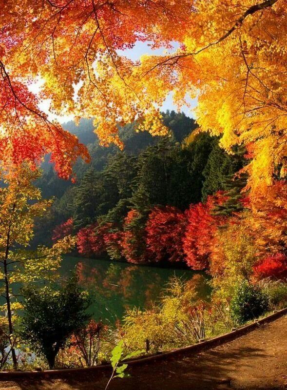 Beautiful amazing colors of fall | Chill of an Early Fall | Pinterest