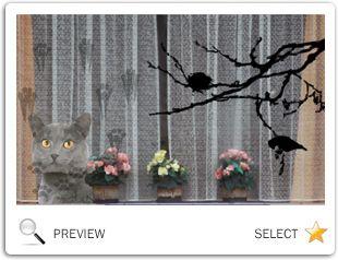 valentine ecards cats