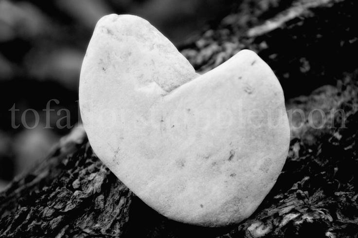 rock the heart valentine epub