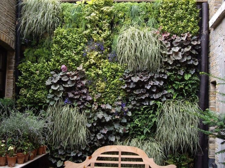 Living wall living wall shade loving plants for for Living plant walls
