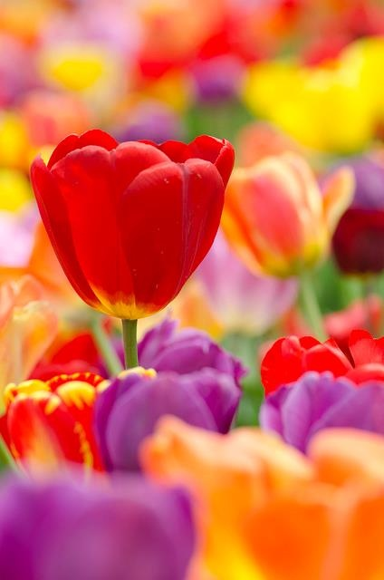 #flores #belleza, -#colores