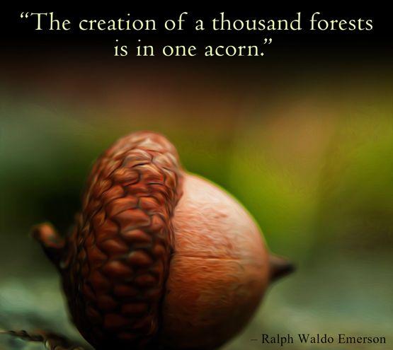 power of nature quotes  quotesgram