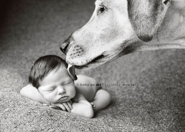 tiny baby + humongous dog ='s Erin Vey's new baby girl. | Flickr - Photo Sharing!