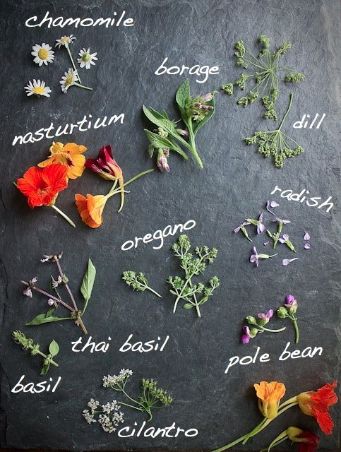 Edible flowers - how cute are these little beauties to add some colour to your next dish?