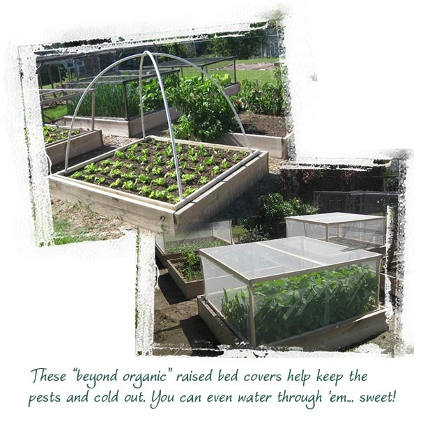 Raised bed with pest cover edible gardening pinterest Raised garden bed covers