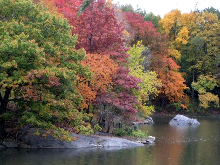 Beautiful Trees in the Fall