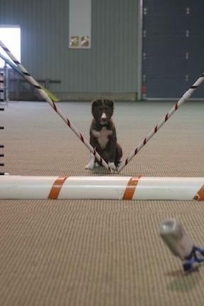 Susan Garrett Dog Training Dvd